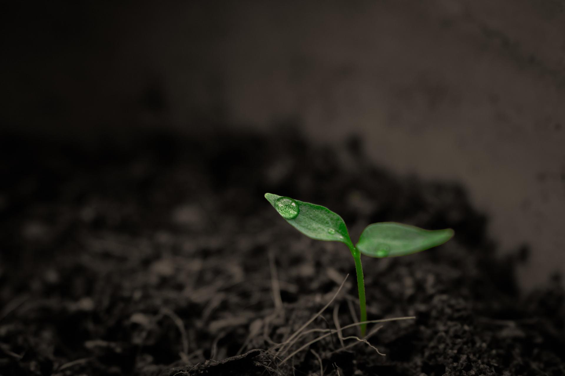 Certificate II in Horticulture